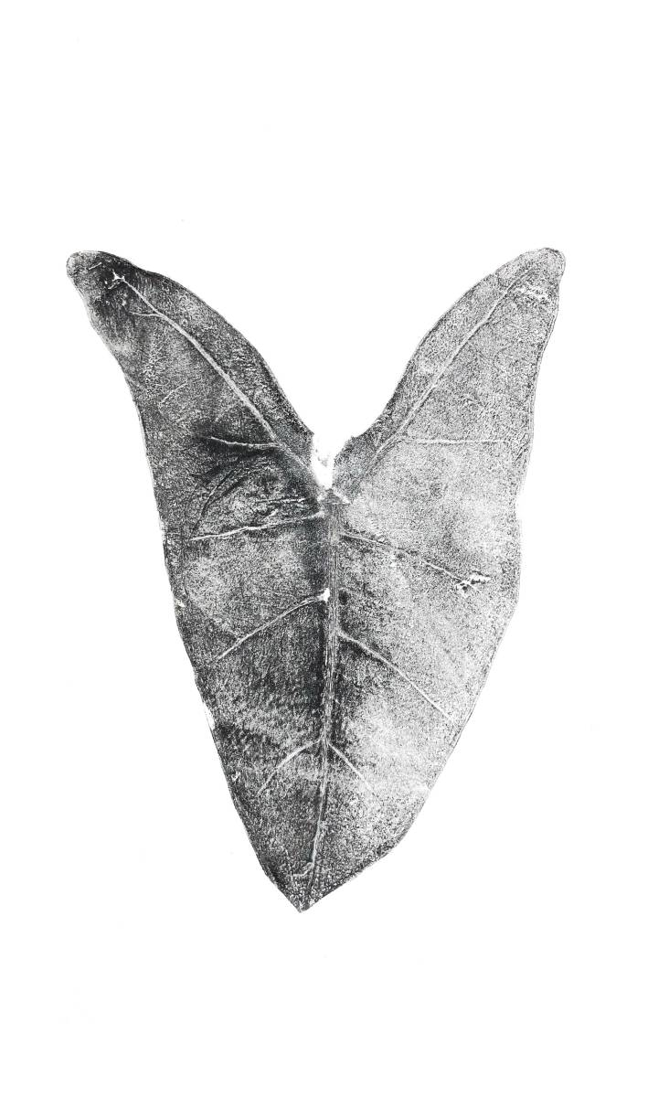 Estampe d'une feuille d' Alocasia Zebrina.  Format 20 cm X 35 cm   Noir et blanc  Juin 2021